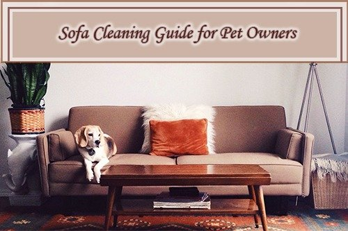 Sofa Cleaning Guide for Pet Owners